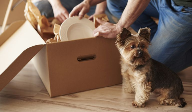 Preparing to move house with your pet dog