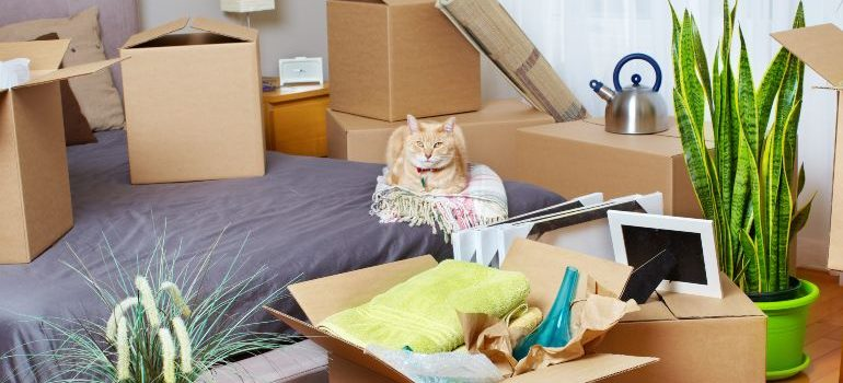 moving house with a cat
