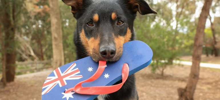 Moving to Australia with a pet