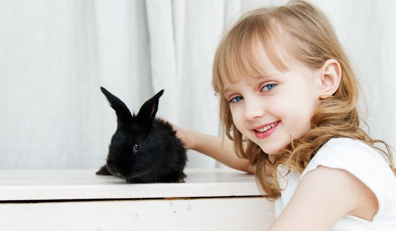 how to move house with a pet rabbit